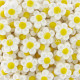 Fleurs marshmallow - sachet de 900g