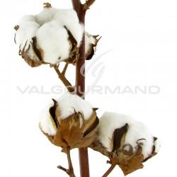 Branche de coton 8/9 fleurs - la branche